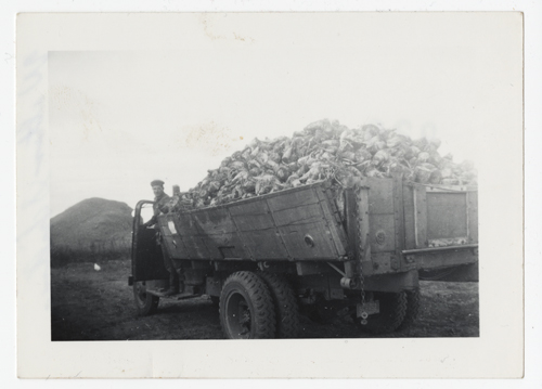 A truck load of beets heads to the beet dump