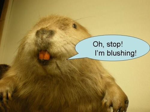 beaver blog photo