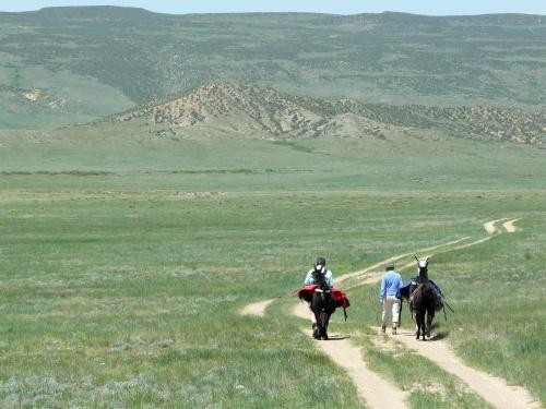 Llama packing on a Soapstone Prairie trail