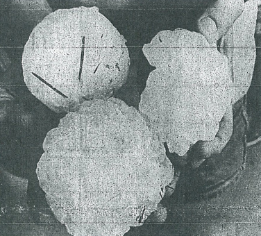 Grapefruit-sized hailstones that fell near 2700 Trenton Way from July 31, 1979 Coloradoan