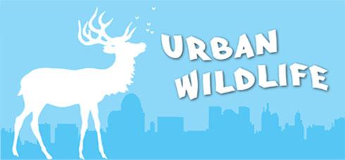 urbanwildlife